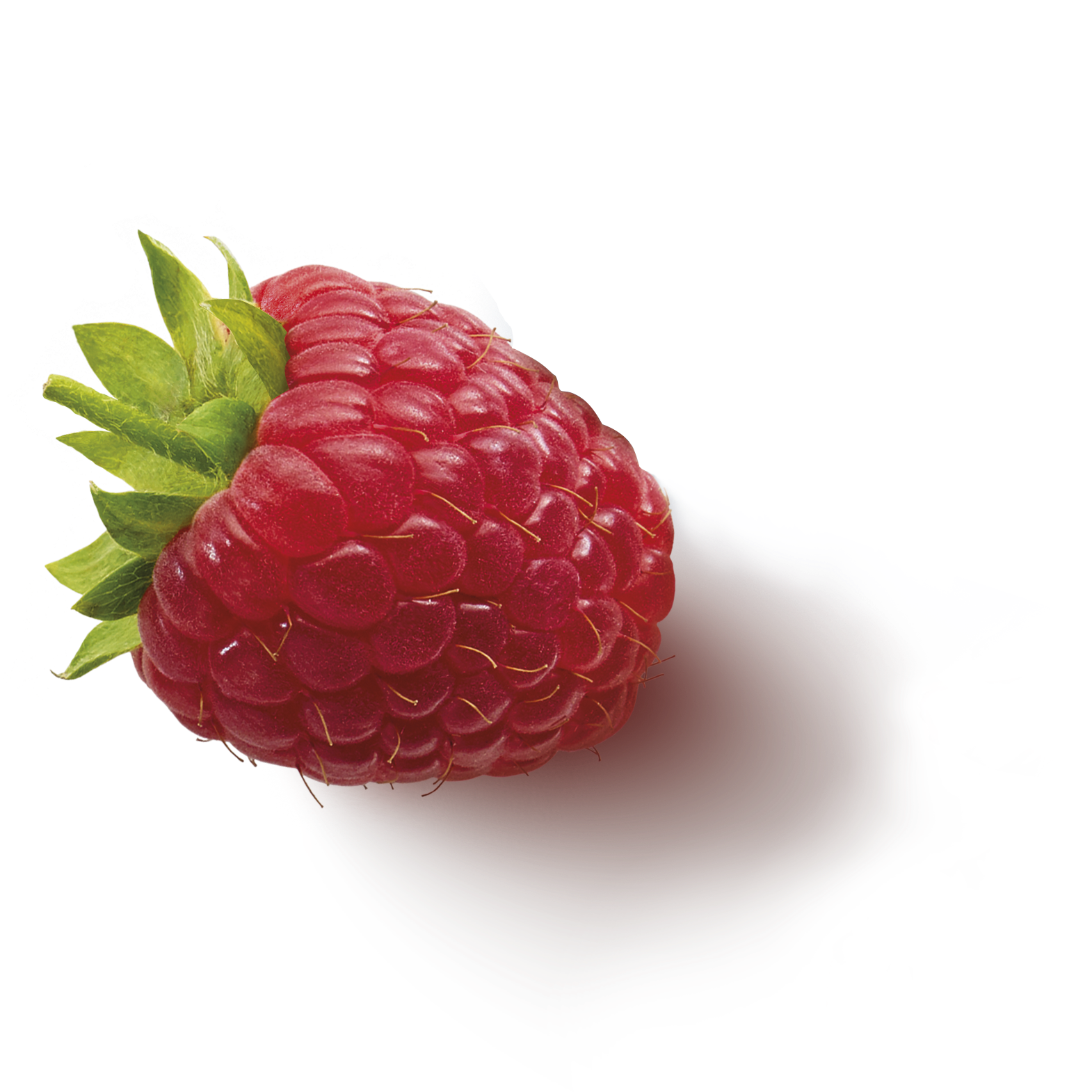 fruitinfusion-forestfruit-ingredient2-raspberry.png