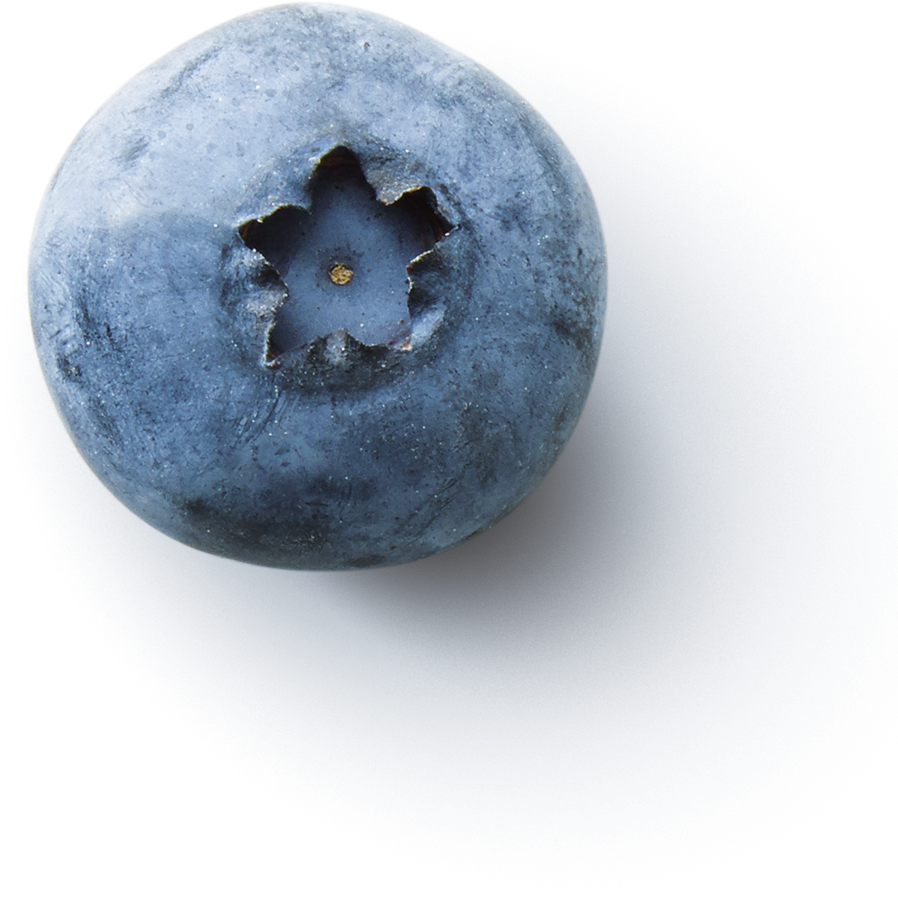 fruitinfusion-forestfruit-ingredient3-blueberry.png