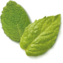 herbalinfusion-peppermint-ingredient3-spearmint.png